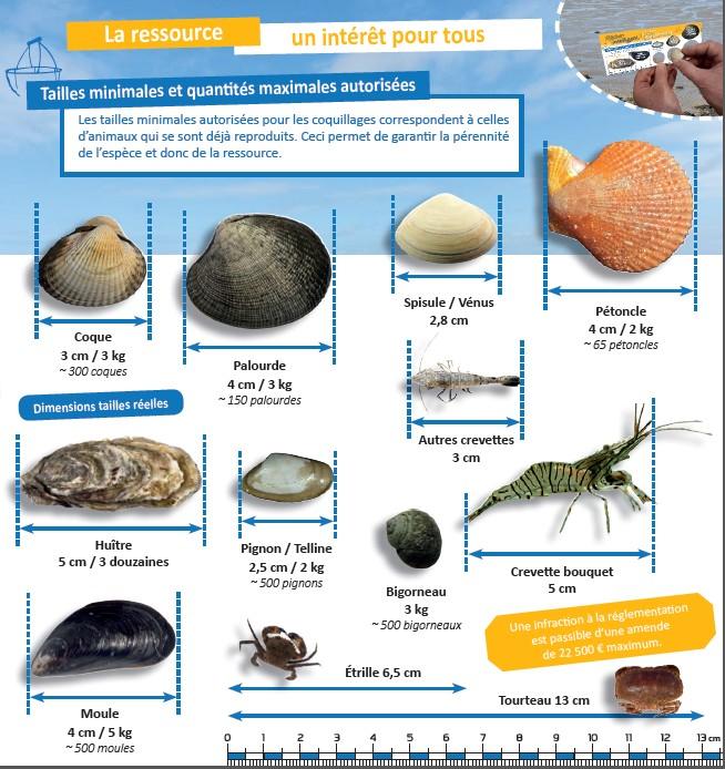 Pêche loisirs en Vendée