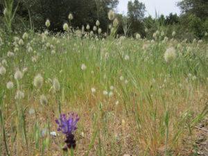 nature biotopia